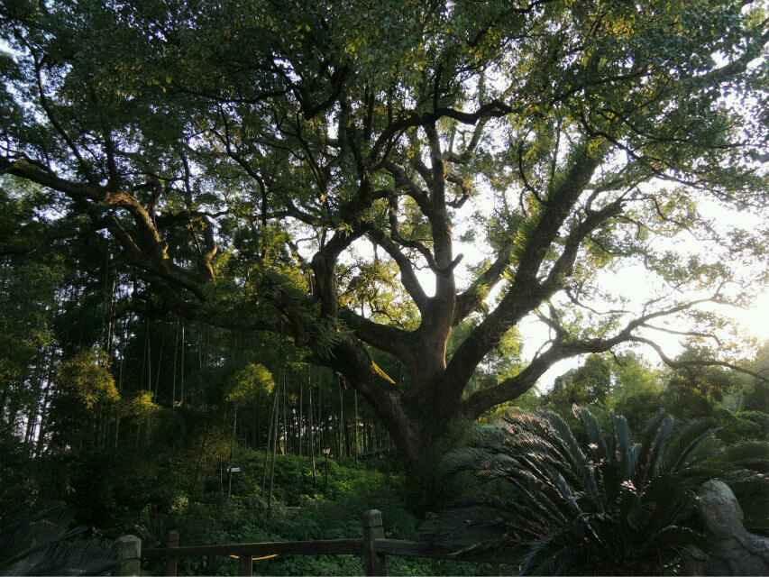 景区里风景很好,树木参天,空气清新自然.