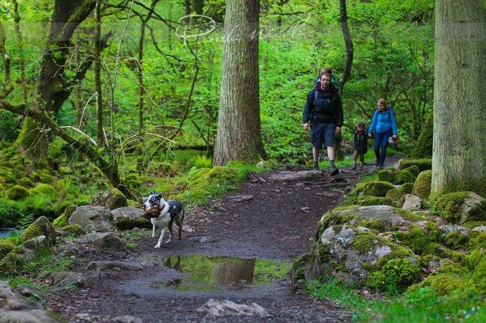 森林徒步观光图片
