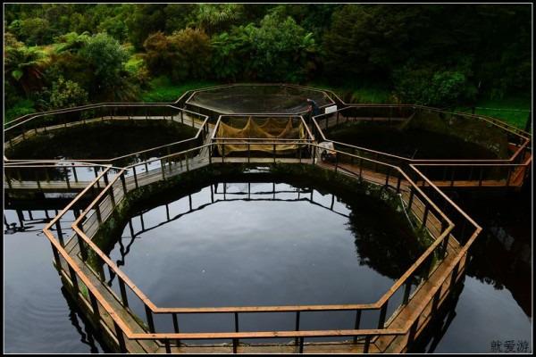三文鱼养殖场图片图片