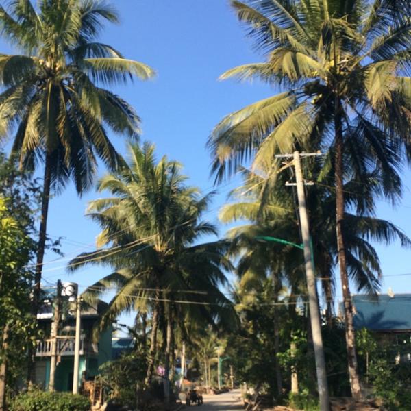 椰子树,贝叶棕树,槟榔树各种热带特有树种而且比起