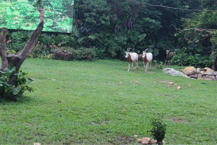 长隆野生动物园是短假出行的好去处.