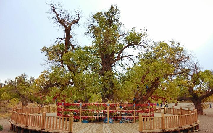 这棵树被当地人当做神树,很多人在树下祈福.