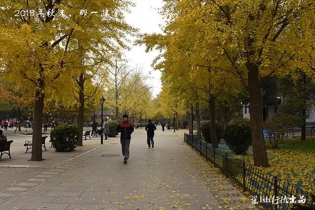 再往前行,银杏树叶纷纷飘落,为地面铺上五颜六色的外衣.