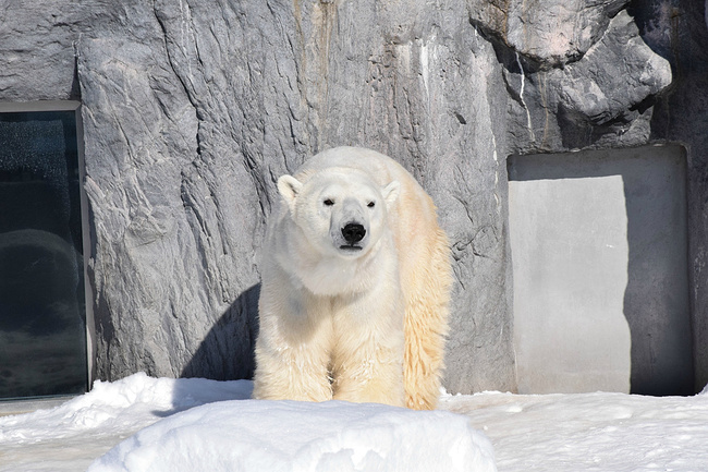 北极熊,看我多威武!图片蜘蛛侠衣服童装图片