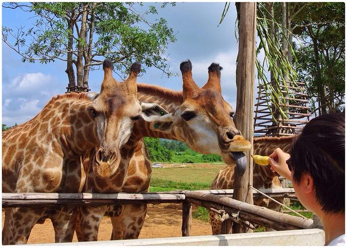 小动物园图片