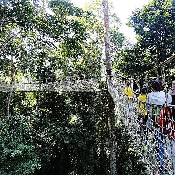 望天树景区最值得玩的项目树冠走廊在很多的景区倒也有过高空缆桥的穿越史,当我起初仰起头,看到那一段空中走廊倒也不以为然,等到从入口中登上了空中走廊,才发现不一样的精彩!原来这条是真正意义上的空中走廊,一直在森林的上空,飞架在多株望天树的树杆之上,高达12层楼,蜿蜒曲折,全长有500余米。跟望天树的树冠走廊比起来,新加坡的超级树真是小儿科了,新加坡的超级树空中走廊完全是走在平地之上 ,而望天树景区的树冠走廊则是悬吊式的,用尼龙绳和尼龙网作护栏,踏底是铝合金梯条拼接而成的,在每株望天树交汇处,会围绕树身有一个