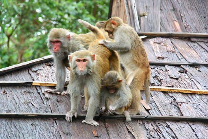 不要翻包,这些猴子看见翻包直接就抢,很野蛮的 南湾猴岛评论 去哪图片