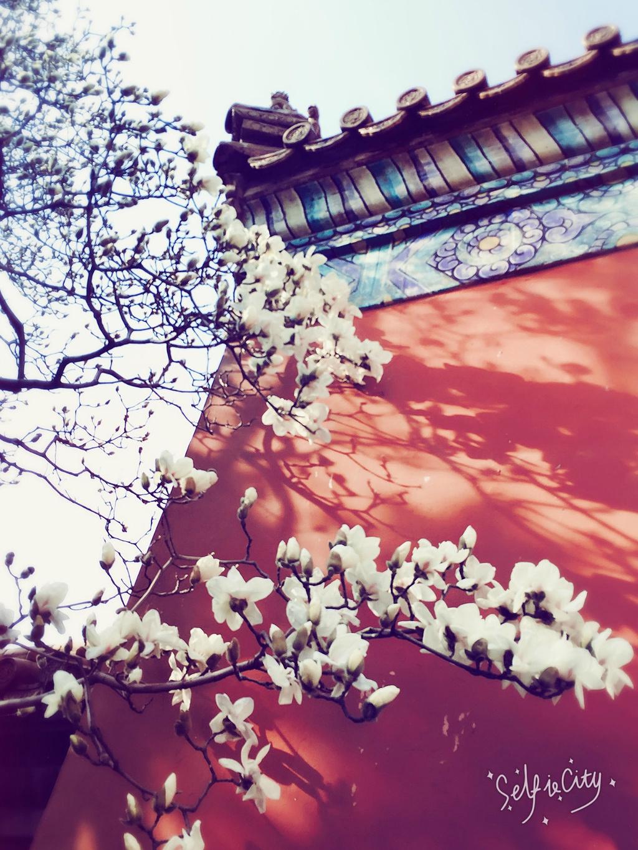 北京游受宰记(欲游长城必看附攻略)-长城旅游攻三峡人家旅游秘籍自助游图片