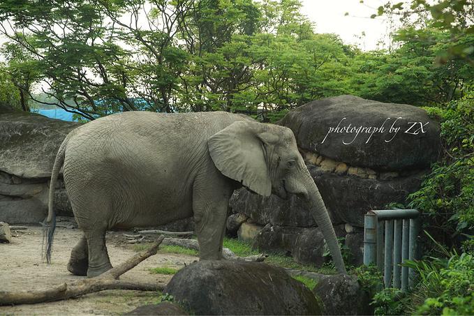 台北市立动物园图片