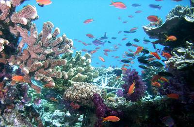 记我的马尔代夫满月岛甜蜜婚礼&神仙珊瑚蜜