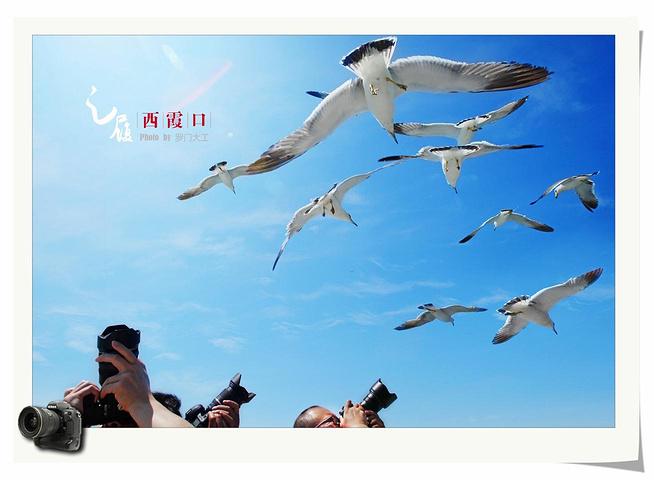 这就是海驴岛标志性的景点月牙湾.