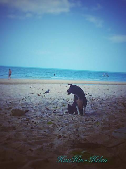 在海边的小动物