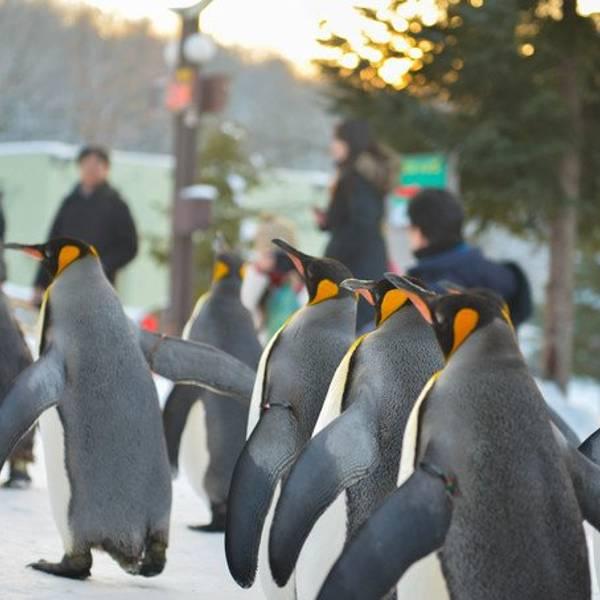 动物园的朋友们如果想看11点的散步
