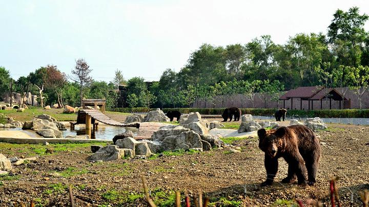 """继续前行,前面有什么惊喜的动物呢_沈阳森林动物园""""的评论图片"""