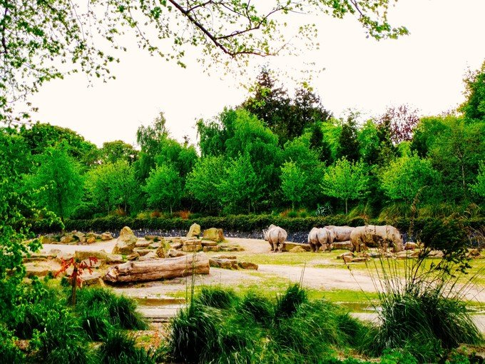 都柏林动物园图片