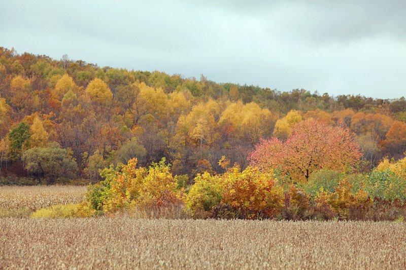 北国的秋,永远的色彩——林都宜春