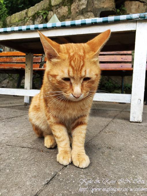 肥肥猫咪图片