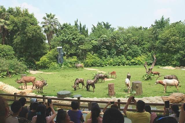步行区却很多惊喜,和其他动物园最大的不同就是很多动物都是在开放