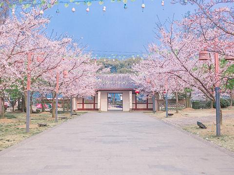 2019樱花谷_旅游攻略_门票_地址_游记点评,无锡旅游