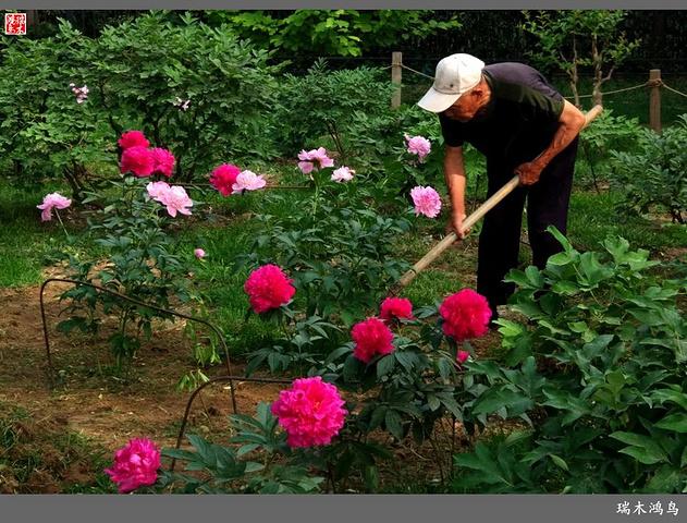 相信在未来的日子里,我们的幸福会像春天的花儿一样绽放,我和春天有个