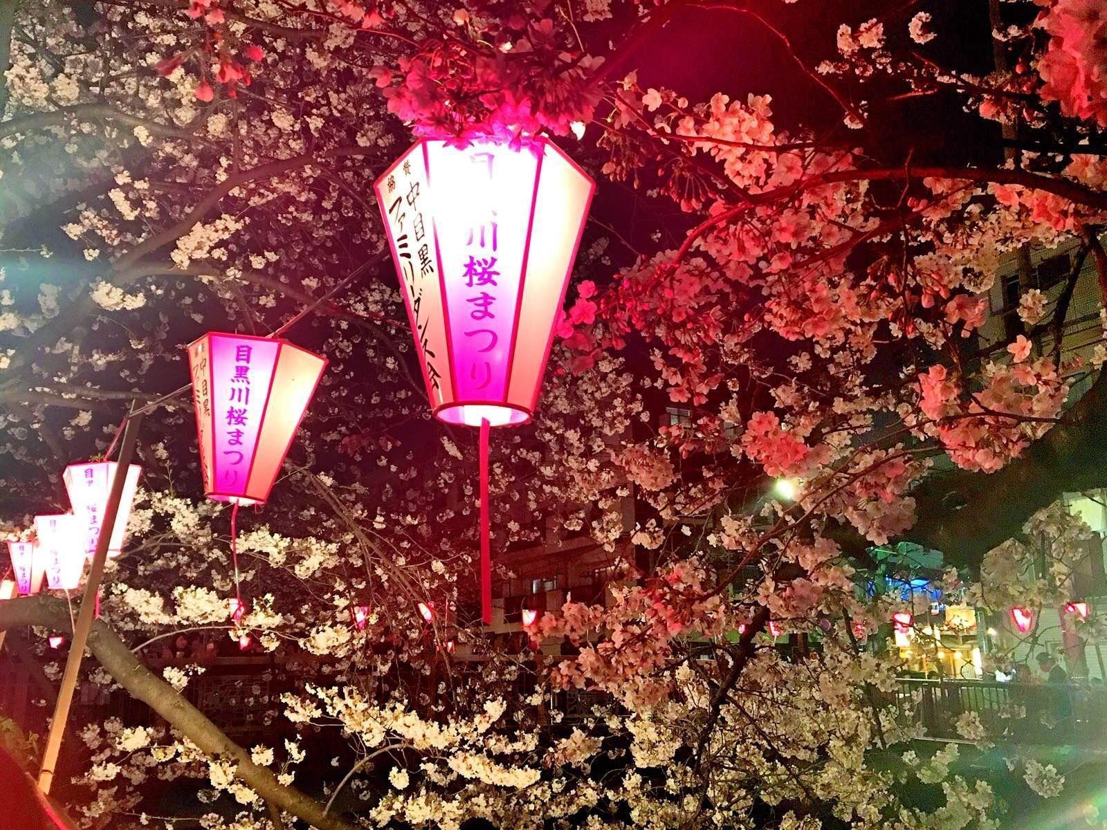 只为遇见最美的你—东京5日暴走赏樱记