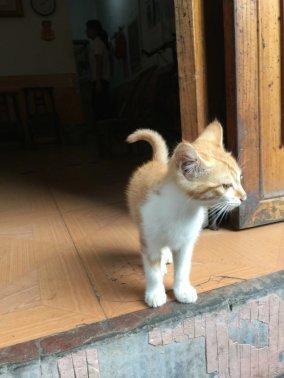 偶遇傲娇的小猫咪.