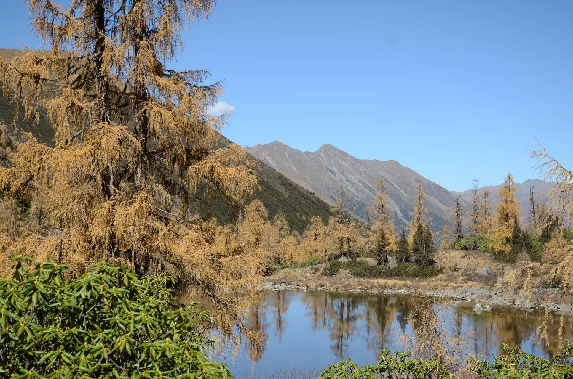 稻城,亞丁,党岭的秋天,在記憶中纏繞