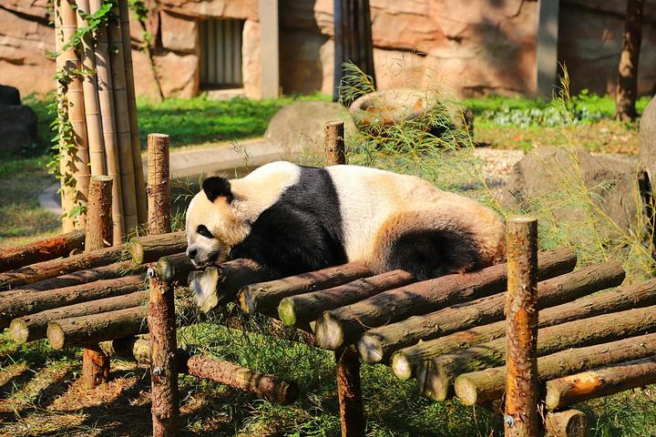 慵懒的趴着晒太阳.除了熊猫,鹦鹉,还有很多小动物