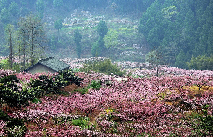 """田园城市""""成都东郊龙泉山生态旅游功能区,是四川著名风景区——花果山"""