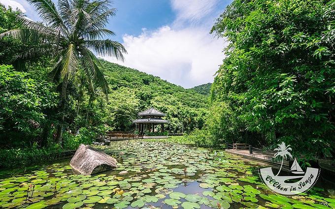 亚龙湾热带天堂森林公园是距三亚最近的天然大氧吧,拥有中国最南端图片