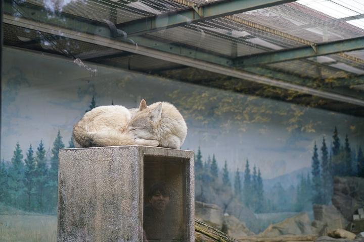 冬天的动物园真的不是那么好玩啊,太冷了实在.