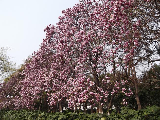 杭州、乌镇、西塘5日游_嘉兴旅游攻略_自助游攻略甜甜物语萌87图片