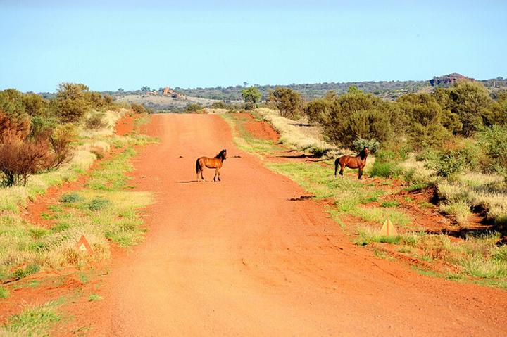 89 首页 野生动物  继续沿2号(namatjira drive)柏油路西行40公里