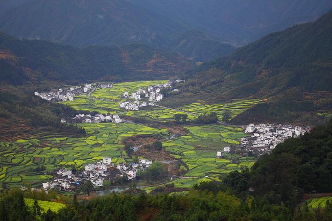 江西山地适合种植什么