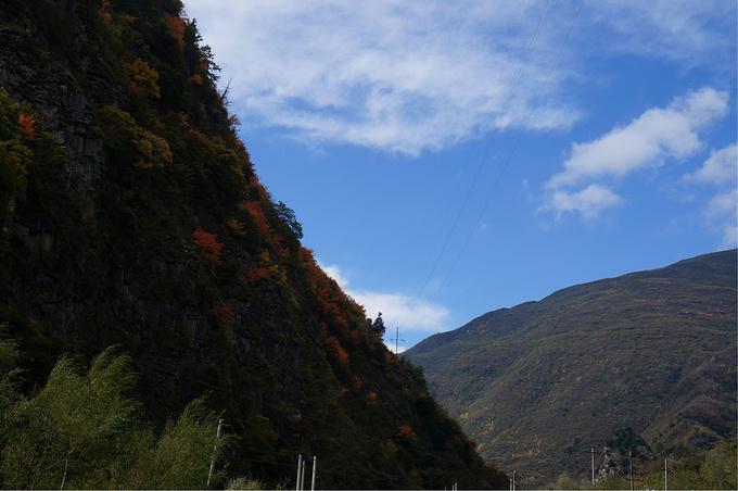 行车中的风景,树叶五彩已明显可见