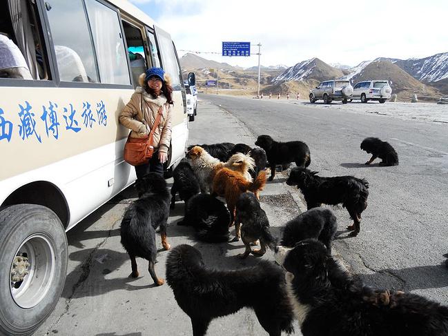2014年春节西藏旅游自由行实用攻略_拉萨v攻略魔术攻略简单图片