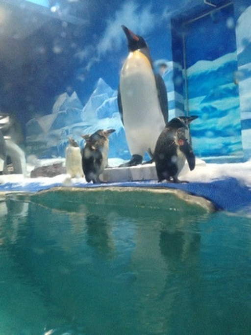 壁纸 动物 海底 海底世界 海洋馆 鲸鱼 水族馆 512_683 竖版 竖屏