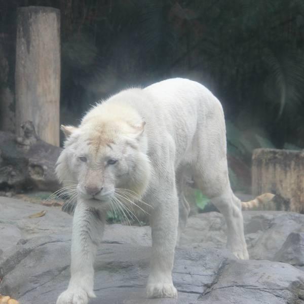 也是亚洲最大的野生动物主题公园.