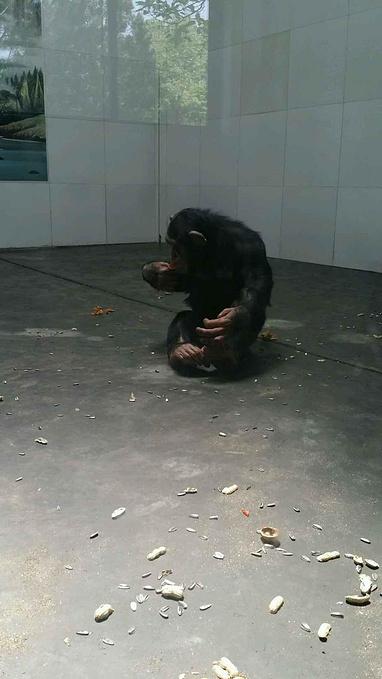 西安秦岭野生动物园 一日实用游记