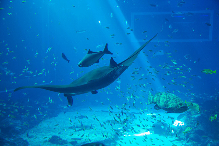 海洋生物园是世界最大的水族世界,里面有超过100000只海洋生物,老少图片