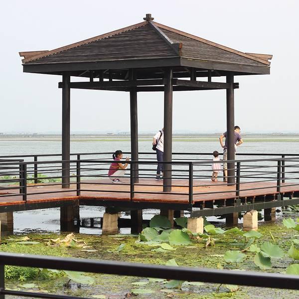 阳澄湖莲花岛