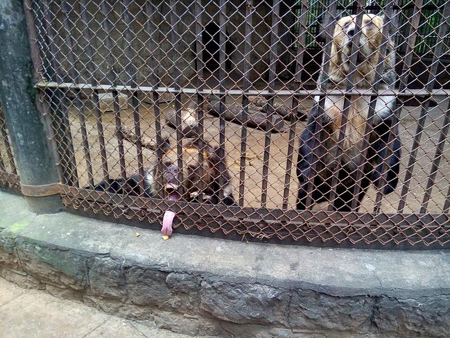 昆明圆通山动物园图片