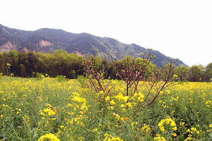 桃花島風景區圖片