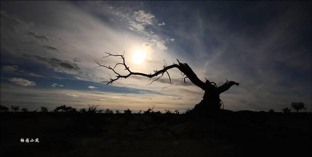 漠的尽头 秋品额济纳旗胡杨林