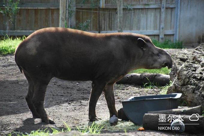 墨尔本动物园图片