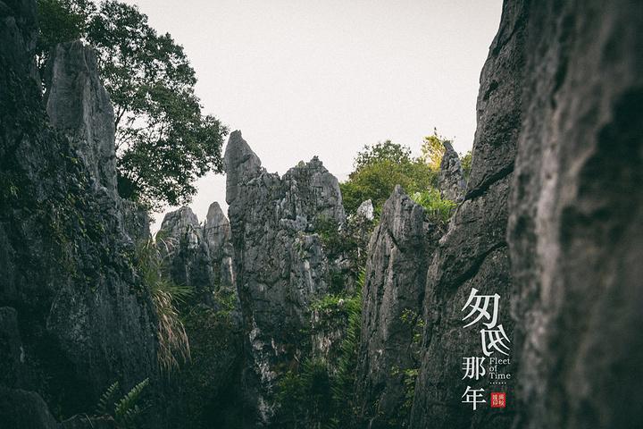永安鳞隐石林,福建版的云南石林,典型的喀斯特地貌.图片