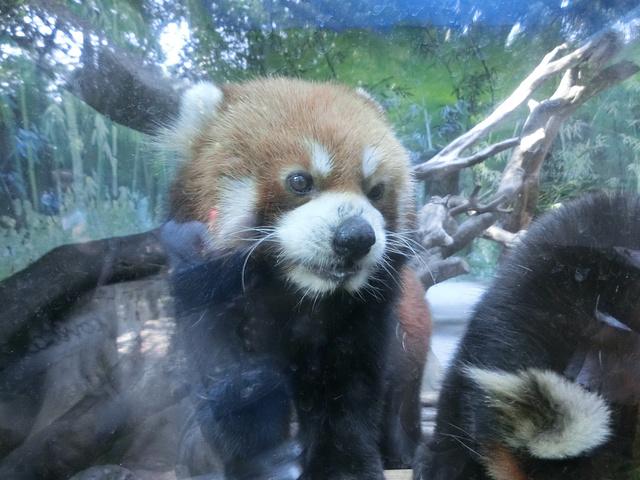 长隆野生动物园行程随拍