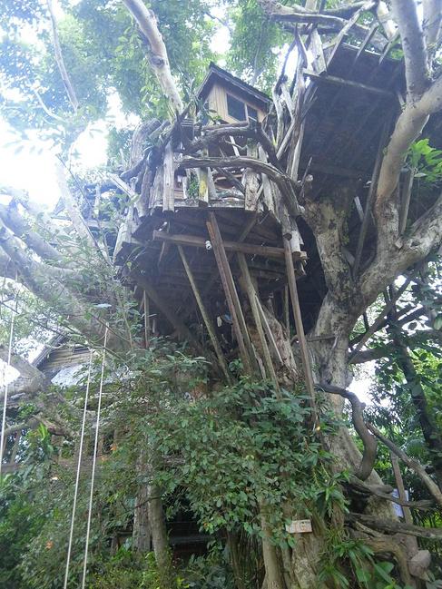 派树屋度假村酒店(pai treehouse resort)图片