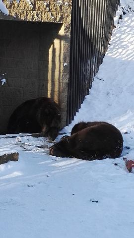 Alaska Zoo评论 去哪儿攻略社区