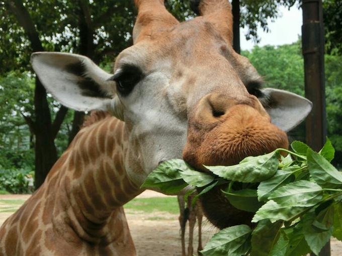 广州长隆野生动物园图片